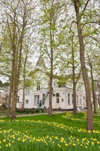 Over ons tuin met narcissen - Piek Zweverink Hoveniers