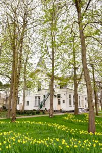 Tuin met gele narcissen - Piek Zweverink Hoveniers