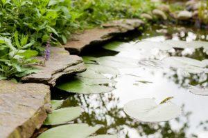 Natuurlijke vijvers ook om in te zwemmen - Piek Zweverink Hoveniers