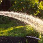 Plant water geven - Piek hoveniers